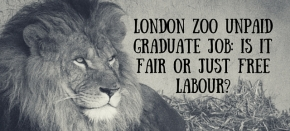London Zoo Unpaid Graduate Job: Is It Fair or Just Free Labour?